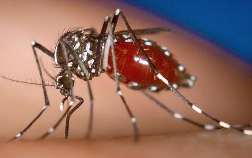 15022016_Aedes_PrefGoiania