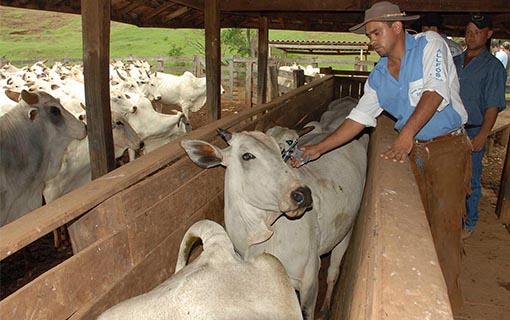 CNM reitera pedido de inserção dos Municípios no Suasa em reunião no Ministério da Agricultura