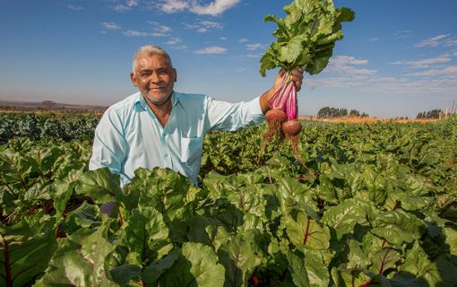 Material gratuito e online explica quais são as tecnologias adequadas para cultivo de orgânicos