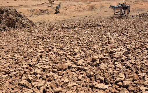 Seca fez Nordeste brasileiro perder 50% de sua produção nos últimos cinco anos, afirma FAO