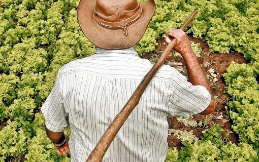 Projeto busca reduzir uso de agrotóxicos para promover sustentabilidade ambiental