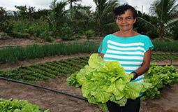 Garantia-Safra: agricultores familiares receberão recurso a partir de dezembro