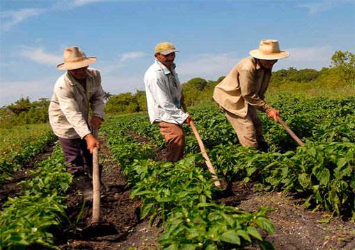 Resultado de imagem para Programa Nacional de Fortalecimento da Agricultura Familiar (Pronaf).