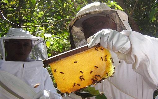 24022017_apicultores_PortalBrasil