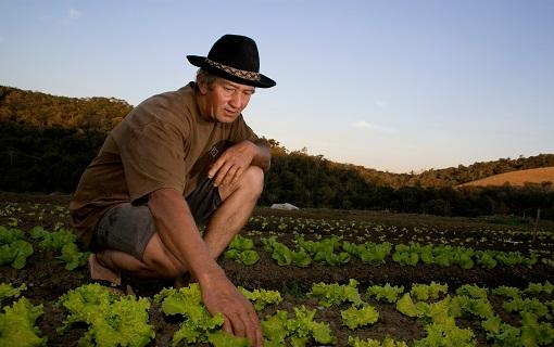 Investimentos federais na área de agricultura tiveram redução de 25% em 2016