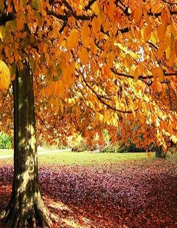 Outono começa hoje e dias ficam menores até início do inverno