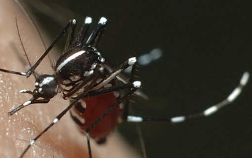 04022016_Aedes_PrefTatuiSP
