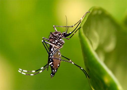 31052016_mosquito_saude.gov