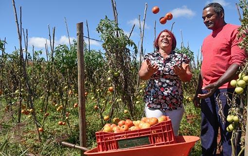 Mais de um milhão de estabelecimentos agropecuários já foram recenseados