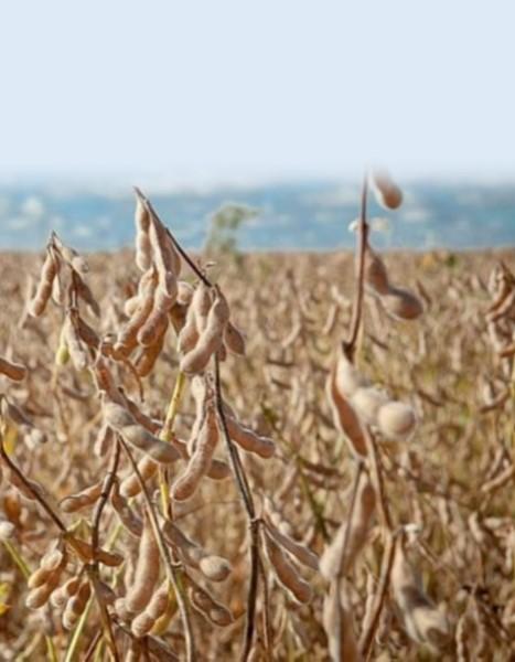 Garantia-Safra: agricultores familiares receberão o recurso a partir deste mês