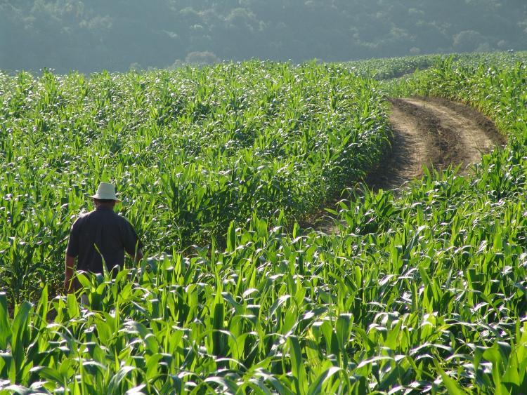 SEAD Agricultura