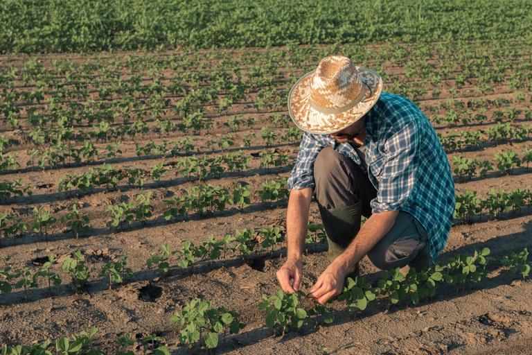 20072021 agricultor safra divulgacao gov.br