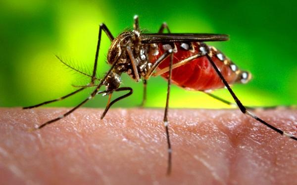 Durante as férias, fique atento à febre amarela e ao mosquito Aedes aegypti