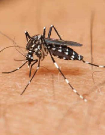 Declarado fim de emergência nacional pelo vírus Zika